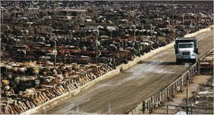 Image result for grass fed cows